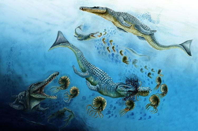 Mitriorhynchus-web